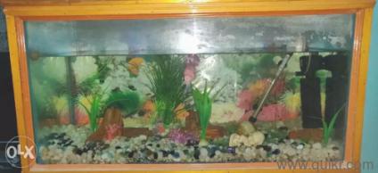Fish Tank With Floran Fish