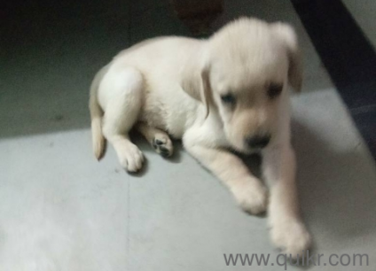 Olx Pet Dogs In Hyderabad - Pets Wallpapers