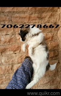 Pets & Pet Care Products in Bikaner: Puppy Care, Dogs & Cat