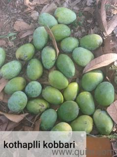 FARM FRESH MANGOES FROM VIZAG - Brand Wholesale - Bulk - Hyderabad