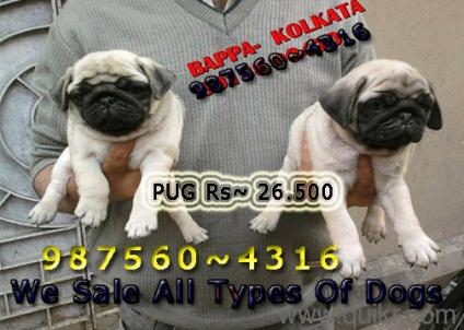 Olx Dogs