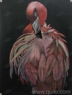 locanto bangalore birds | Used Paintings in Bangalore | Home