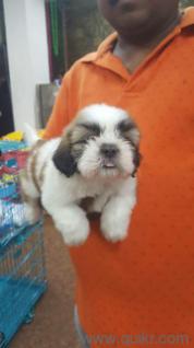 for adoption 7503628092 call german shepherd rottweiler