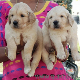 Pet Adoption | Adopt Pet Dogs, Cats in Hyderabad | Quikr