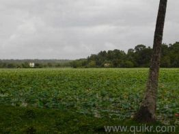 Agricultural land for Sale in Trivandrum | Buy Agricultural