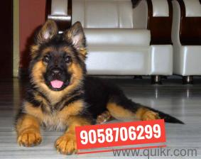 Olx dogs for sale in Vadodara