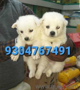 Dog For Sale In Olx In Patna