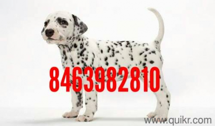 for adoption puppies puppies dogs pets dog kennels kennel near me