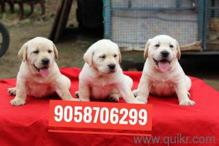 Pet Adoption | Adopt Pet Dogs, Cats in Gorakhpur | Quikr