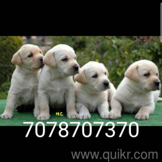 Olx Animals