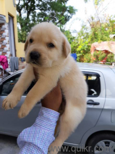 Pet Adoption | Adopt Pet Dogs, Cats in Amritsar | Quikr