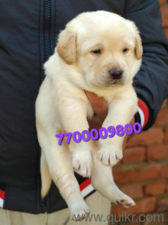 Dogs under rs 5000 in All Quikr