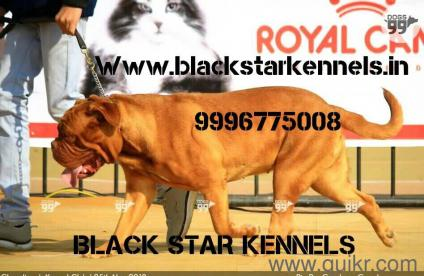 Pet Adoption | Adopt Pet Dogs, Cats in Bikaner | Quikr