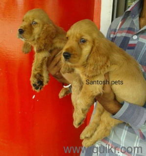 Pet Adoption | Adopt Pet Dogs, Cats in Vizag | Quikr