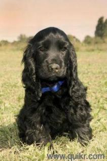 Pet Adoption | Adopt Pet Dogs, Cats in Jamshedpur | Quikr