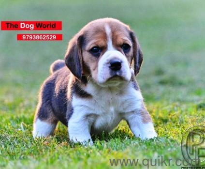 Rottweiler Puppy Price Kolkata In Akola
