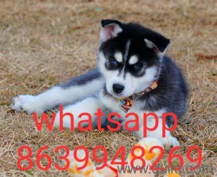 Dog For Sale In Olx In Panipat