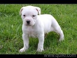 Great dane pups in coimbatore for free in Patiala
