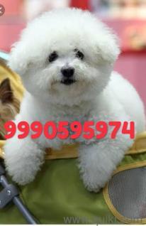 Pomeranian Dog Price In Erode