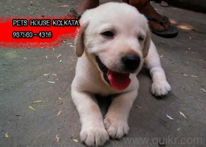 Olx Dogs
