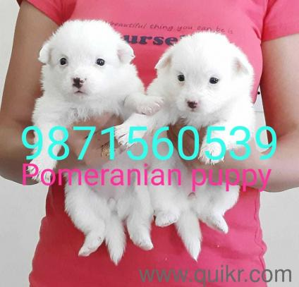 Pet Adoption   Adopt Pet Dogs, Cats in Www   Quikr
