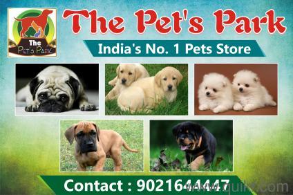 Dog Price 500 To 1000 In Mumbai